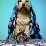 What Is A Pet Psychic?